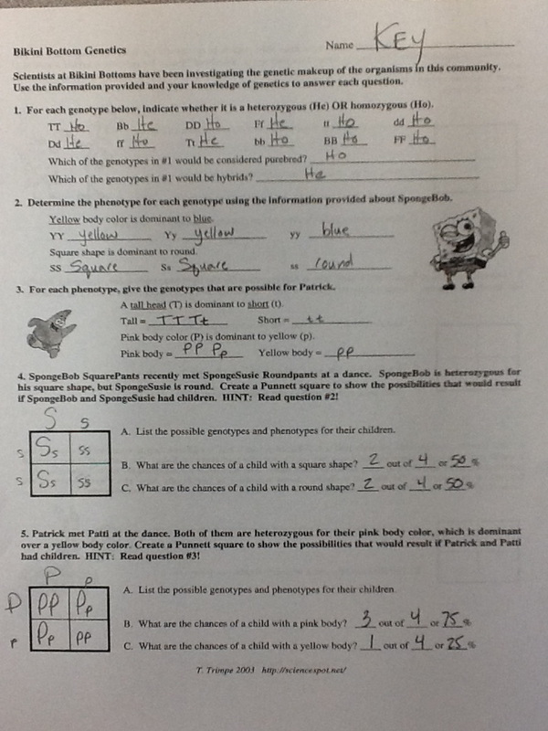 Worksheets Bikini Bottom Genetics Worksheet in class this week 2014 15 sullis science site picture